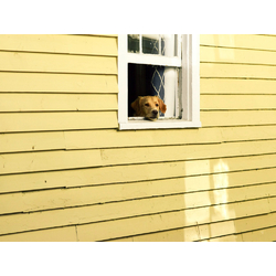 Dog in Window | Собака в Окне