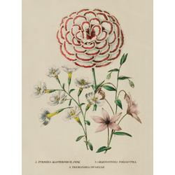 Turner's Masterpiece Pink, Chaenostoma Polyantha