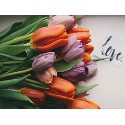 Tulips   Тюльпаны