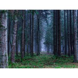 Nature Landscape | Пейзаж - Лес