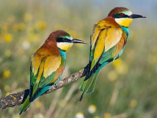 Категория постеров и плакатов Птицы