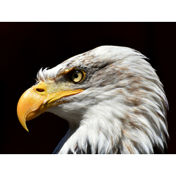 Birds | Птицы - Орел