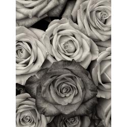 Rose | Роза