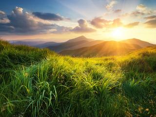 Категория постеров и плакатов Солнце и трава