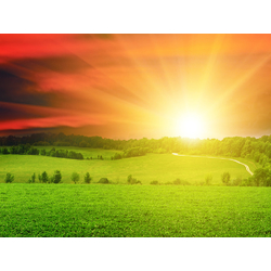 Sun & grass | Солнце и трава