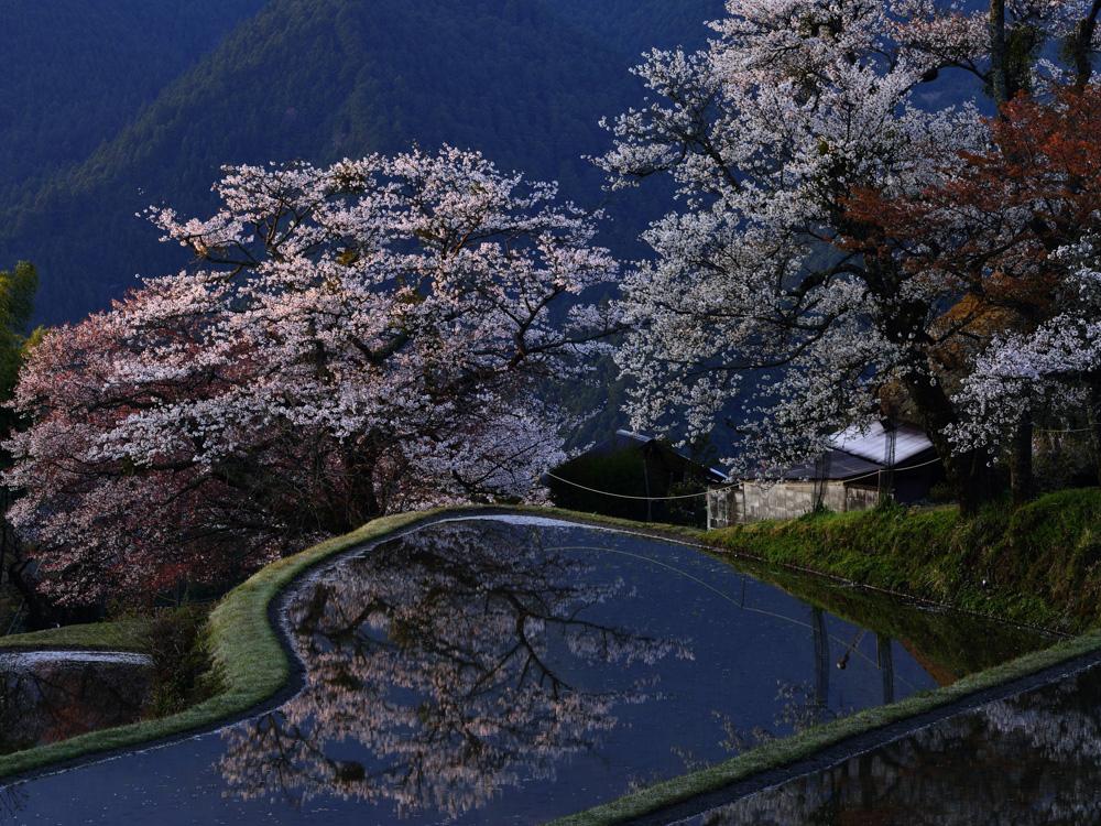 постеры японский сад
