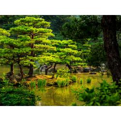 Japanese nature | Японская природа