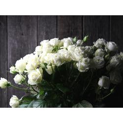 Roses | Белые Розы