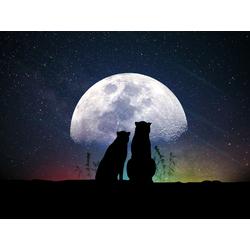 Moon | Луна