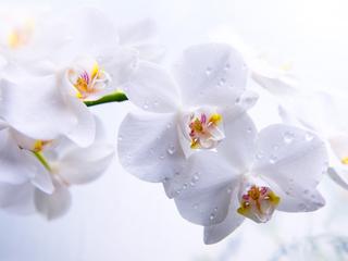 Категория постеров и плакатов Орхидеи