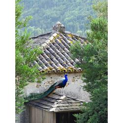 Provence | Прованс с птицами
