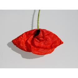 Flowers | Цветы | Скандинавский