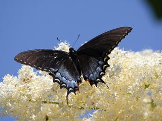 Категория постеров и плакатов Бабочка