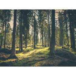 Forest | Лес