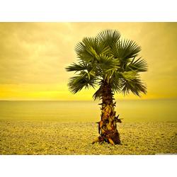 Palm | Пальма