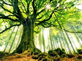 Категория постеров и плакатов Дерево