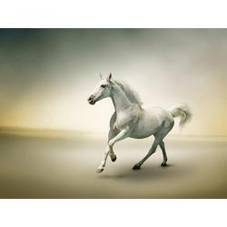 Horse | Лошадь