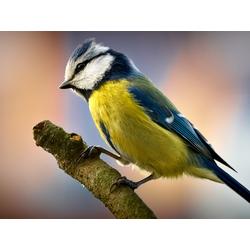 Bird | Птица