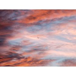 Bird | Птица: Небо