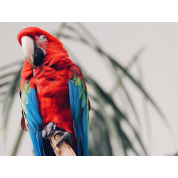 Bird | Птица: Попугай