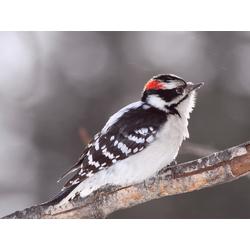 Bird | Птица: Снег