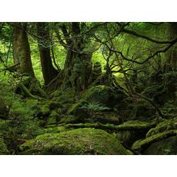 Jungle | Джунгли