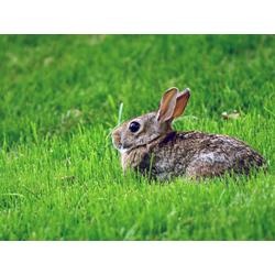 Hare | Заяц