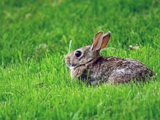 Категория постеров и плакатов Зайцы и кролики