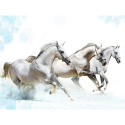 Horses | Лошади