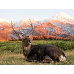 Deer | Олень