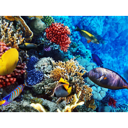 Fish | Рыба