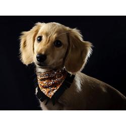 Dog | Собака