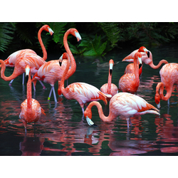 Flamingo | Фламинго