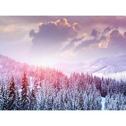 Winter Forest | Зимний Лес